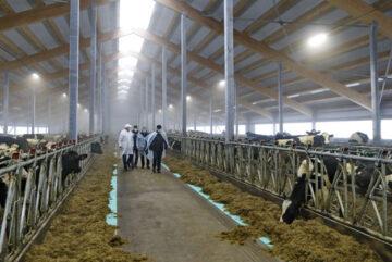 Несколько десятков новых сельхозпредприятий появилось на Вологодчине в прошлом году