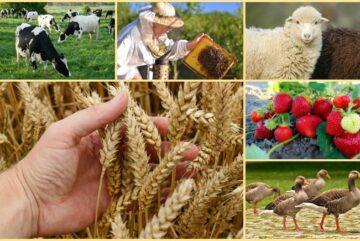 О грантах в сельском хозяйстве расскажут бизнесменам Вологодской области
