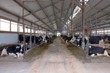 В Чагодощенском районе открылась первая очередь реконструированного животноводческого комплексалятника.