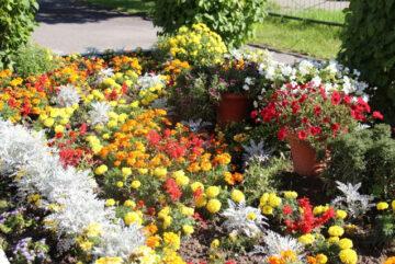 В Череповце для всех желающих открывается бесплатная Школа цветочного оформления и ландшафтного дизайна
