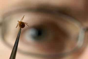 Шесть человек пострадали от укусов клещей в Вологодской области с начала сезона