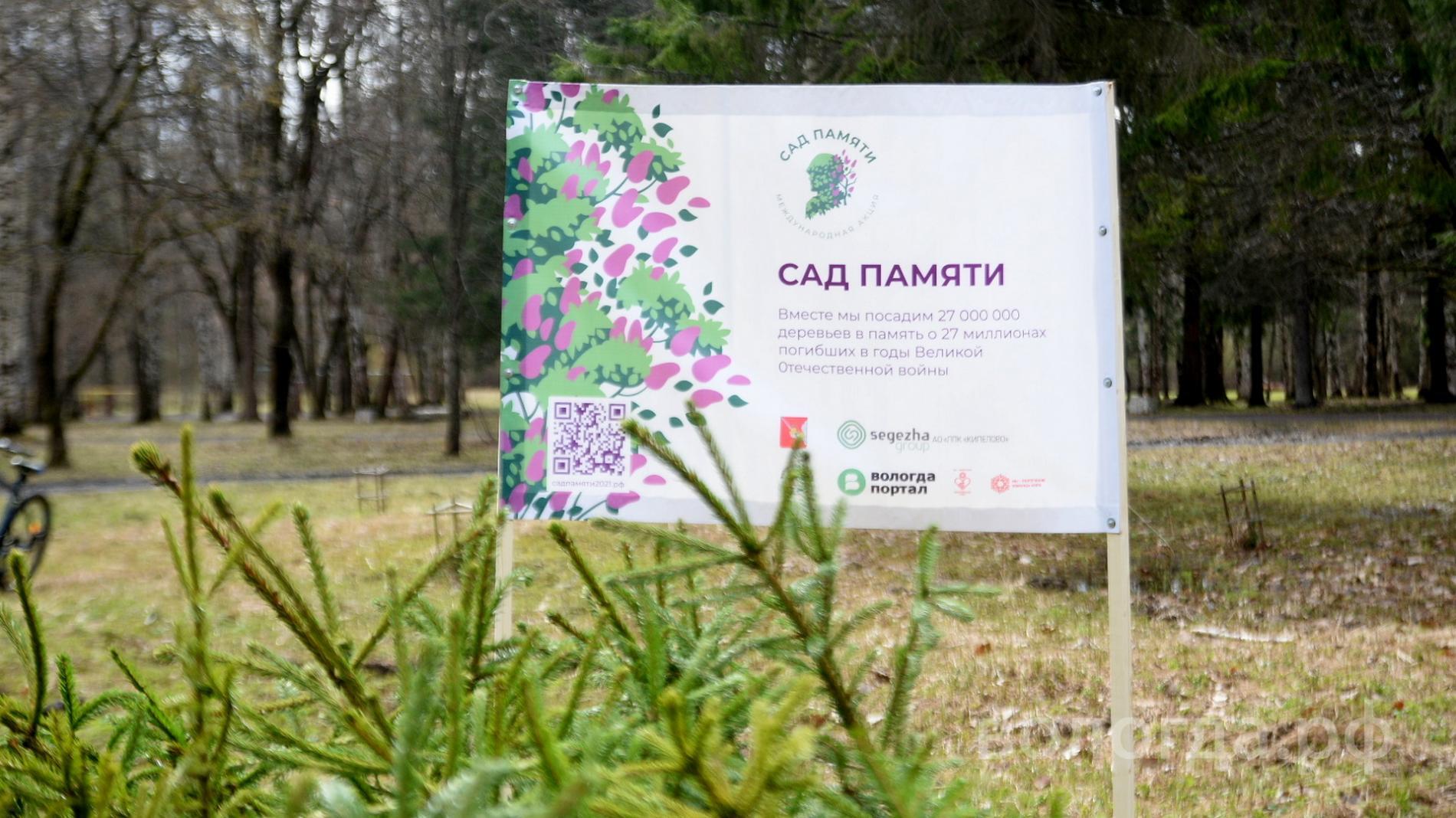 Около 500 елей высадили вологжане в парке Мира