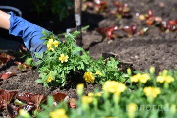 Бригаду садоводов для озеленения города сформируют в Вологде